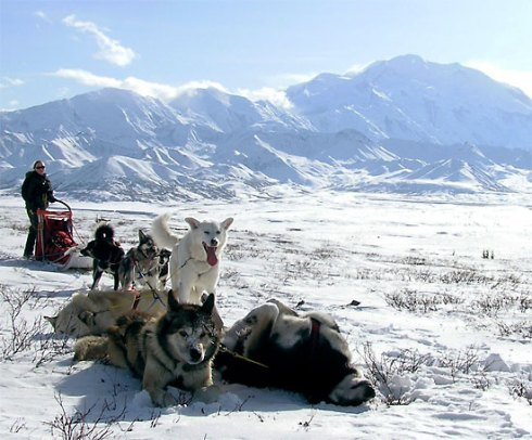 Mushers in Denali