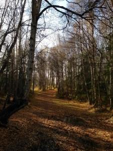 Kincade Park trail