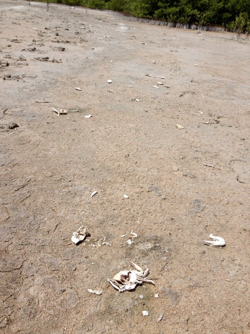 Crab corpse