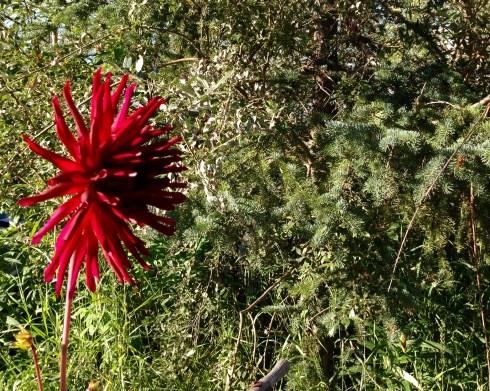 August Blooming