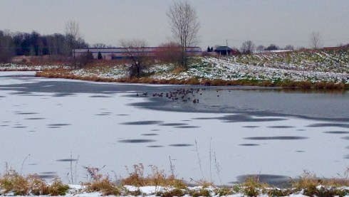 Late season ducks