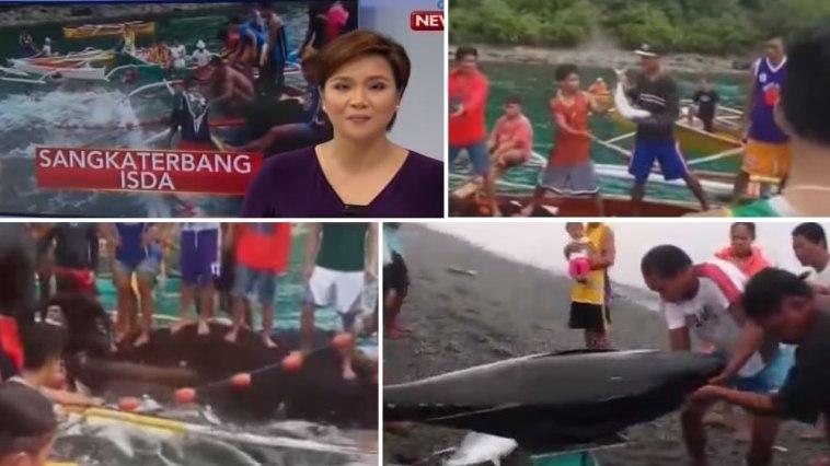 Tuna fish in Surigao