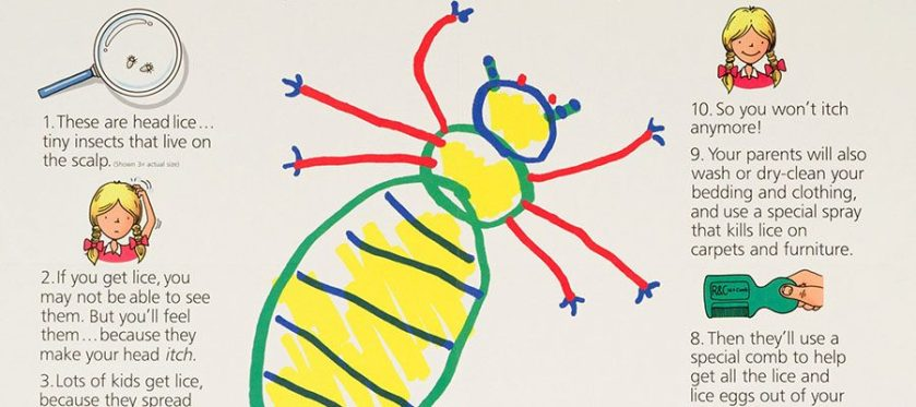 A childlike drawing of an insect from a poster with facts on lice.