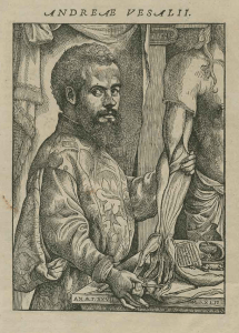 A woodcut engraving of Vesalius demonstrating a disection.