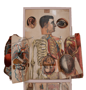 A life sized anatomical atlas with it's flaps or overlays open.