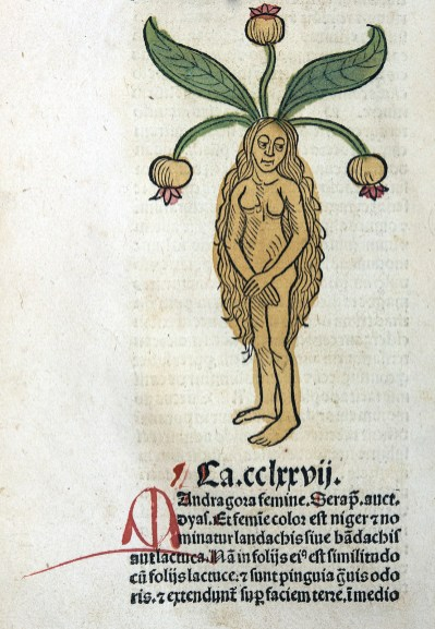A colored woodcut showing a naked woman with long hair and leaves and seedpods coming out of her head.