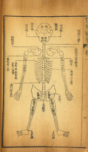 A simple diagram of a human skeleton from the back, labled in Chinese.