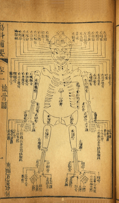 A simple diagram of a human skeleton from the front, labled in Chinese.