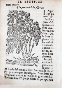 Inset in the text, a wood cut of a feathery plant with asparagus shoots and roots.