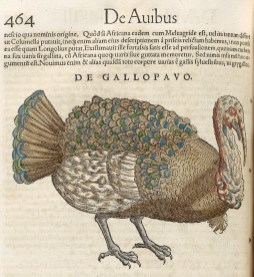 Illustration of a turkey