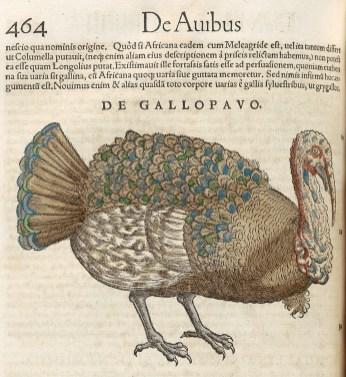 Illustration of a turkey