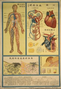 Cinese poster illustrating parts of the human circulatory system.