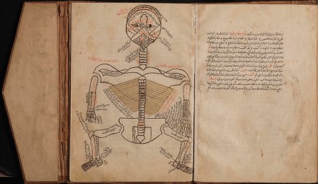 A bound manuscript open to a labeled drawing of the human skeletal system.