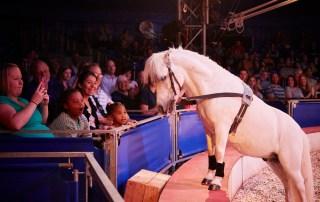circus flora horse act