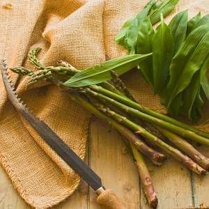 asparagus and wild garlic harvested