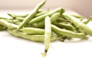 harvested broad beans