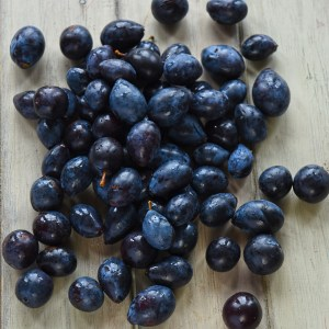 foraged damsons