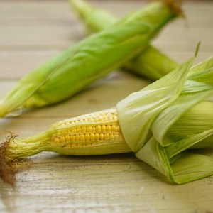 harvested sweetcorn