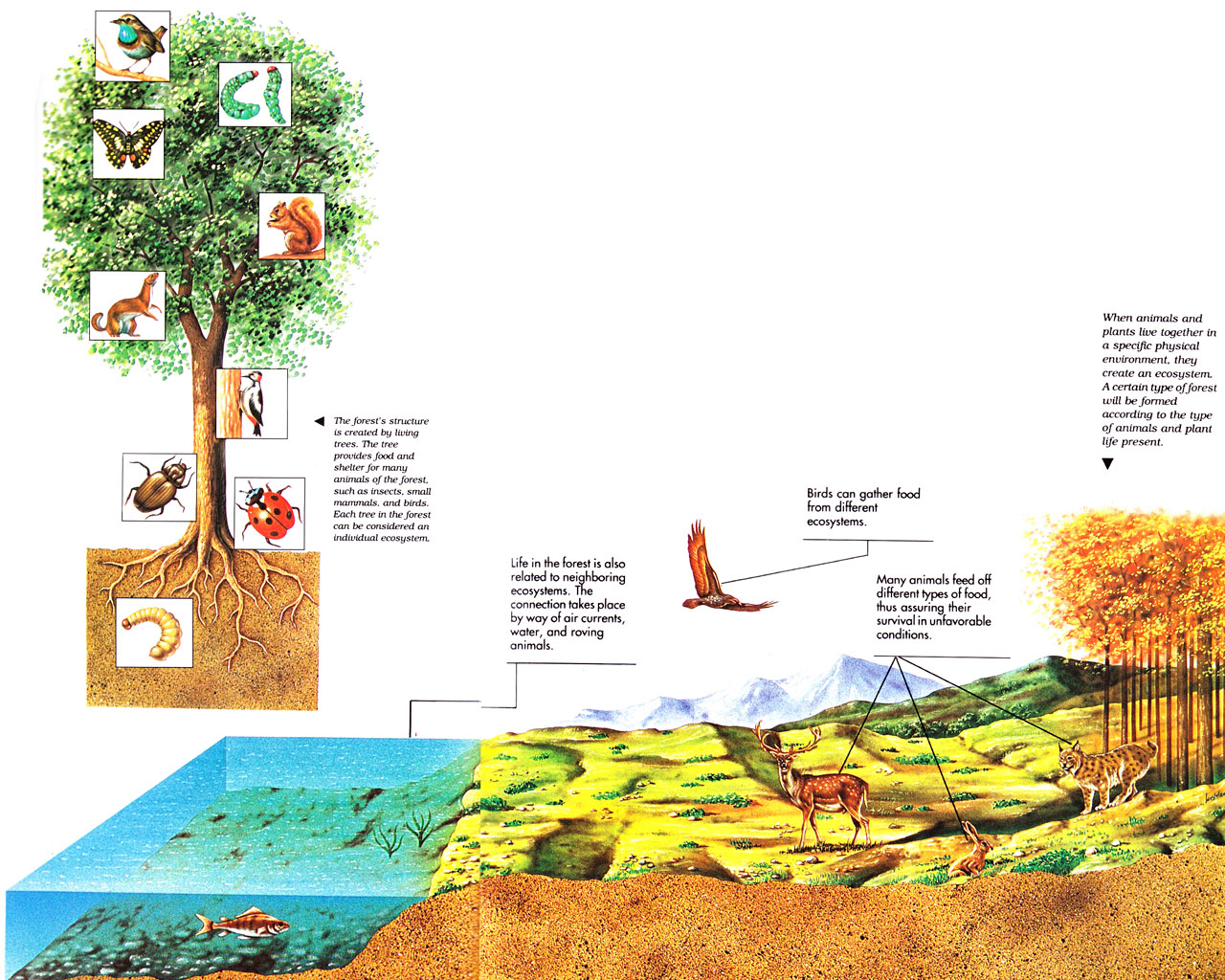 rainforest food chain diagram for kids 3406e jake brake wiring nov 28 dynamic interaction relationship witness a