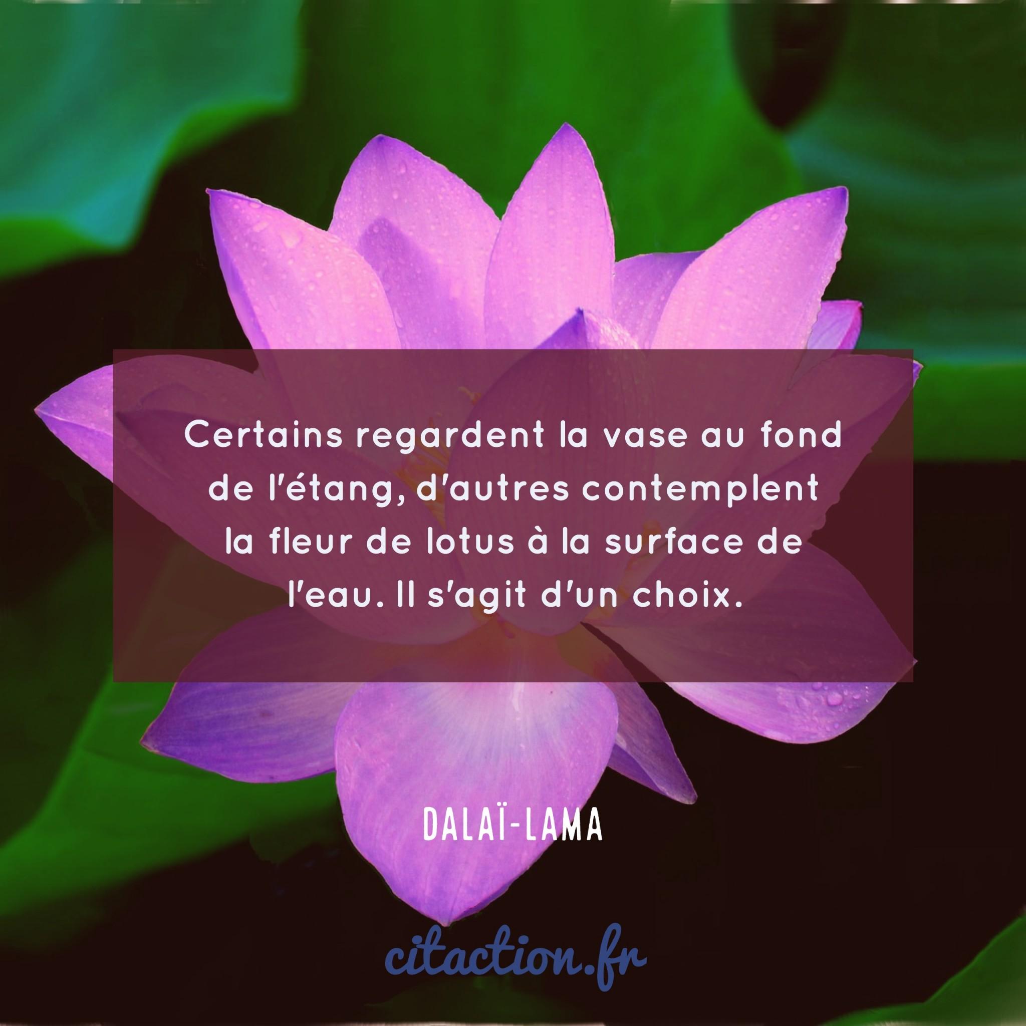 certains-regardent-la-vase-au-fond-de-letang-dautres-contemplent-la-fleur-de-lotus-a-la-surface-de-leau