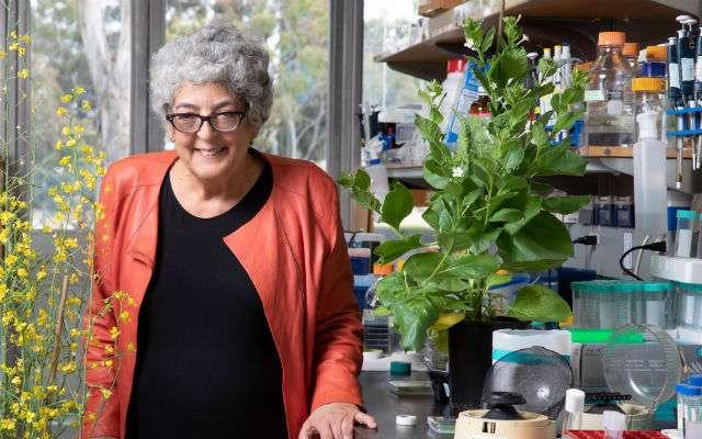 Las plantas podrían contribuir a la disminución del CO2