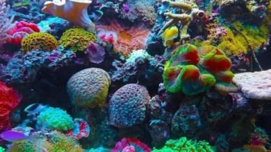 Photo of Advierten sobre el daño a los corales causados por el cambio climático