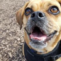 A happy dog on her walk