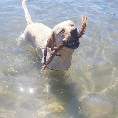 happy dog on a beach walk