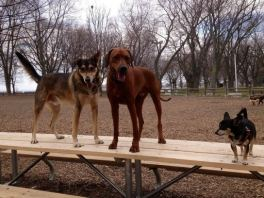 The dogs on the table at the park