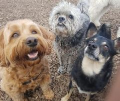 three dogs at the park