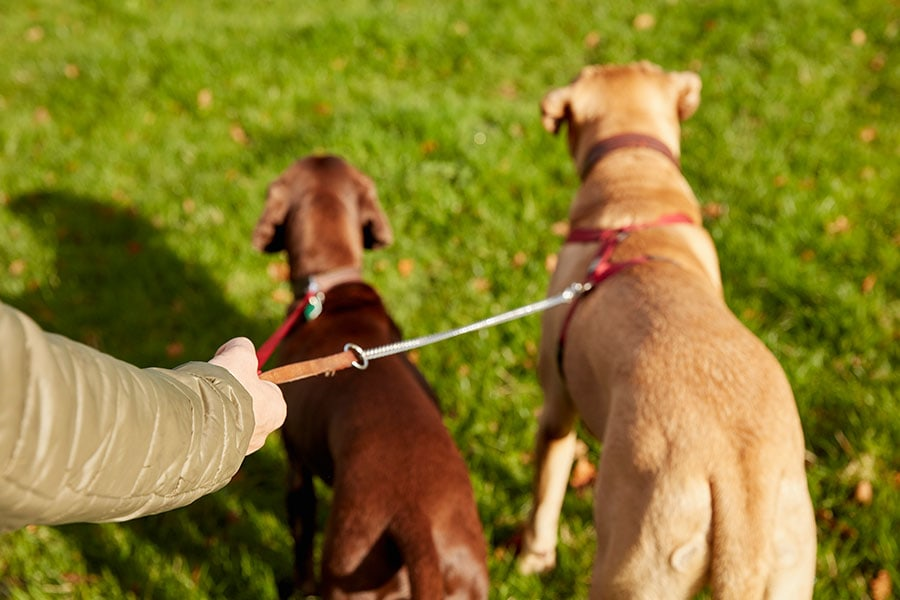 Why you should still use a dog walker, even though you are working from home.