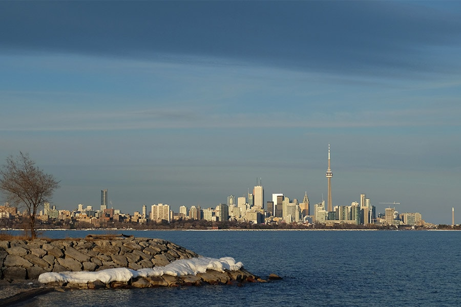 TOP 5 PLACES TO TAKE YOUR DOG SWIMMING IN TORONTO