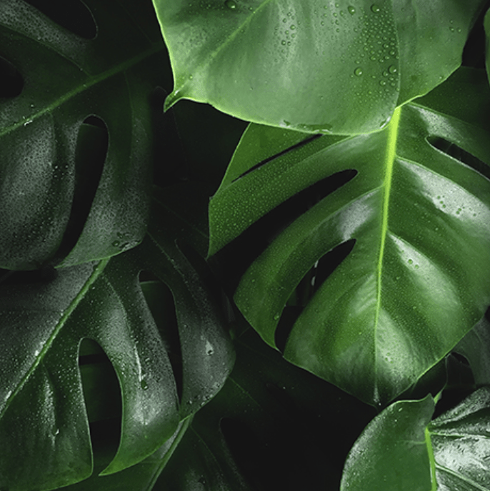 Ogreen-closeup.png