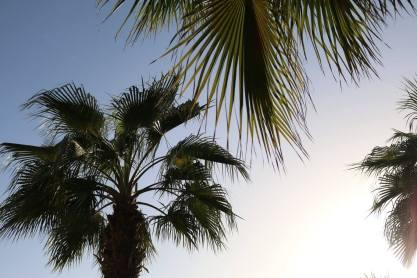 Dubai-palmbomen-2016