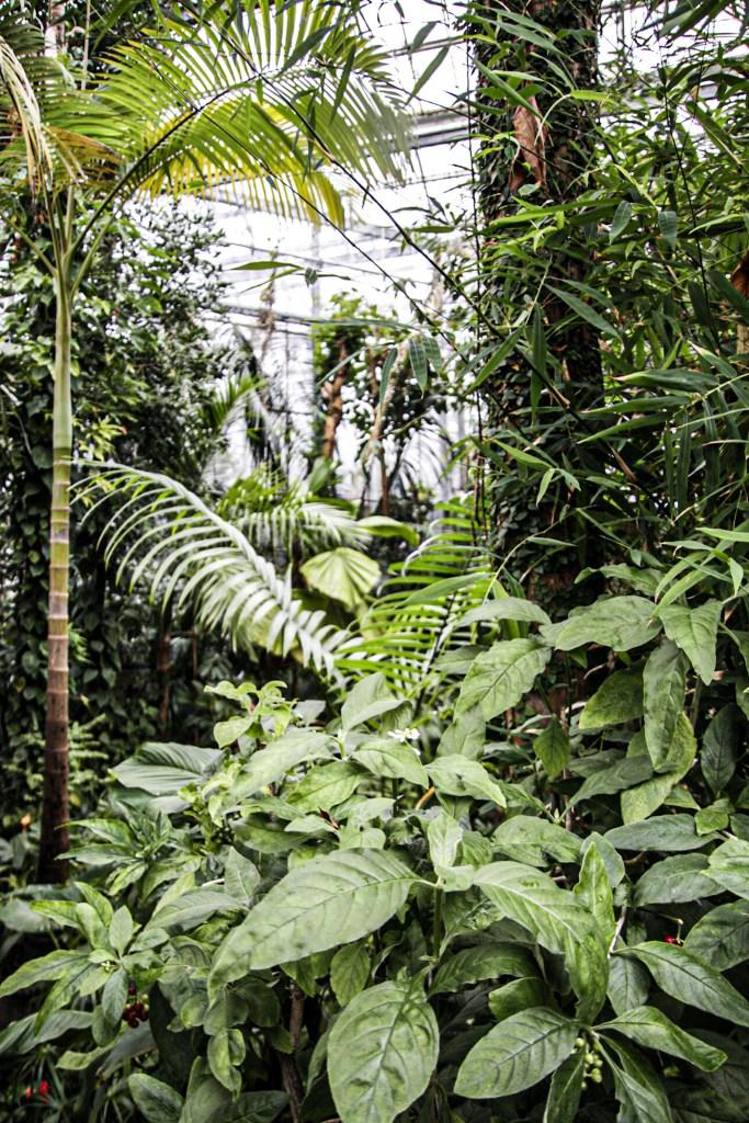 Hortus Botanicus Amsterdam Tropic 3 climate zone