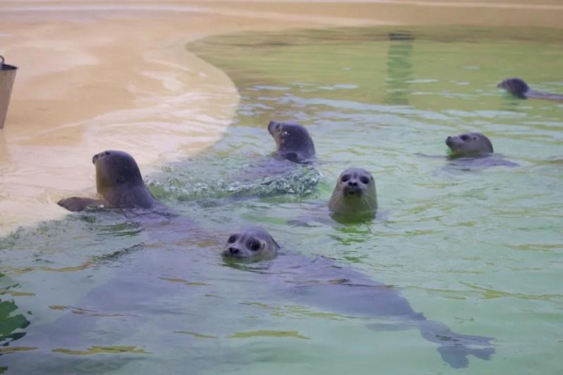 Texel-Eco-Mare-zeehonden