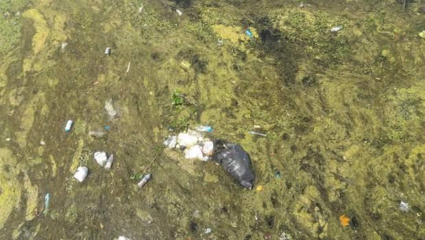 Ndotja në Liqenin e Shkodrës. Foto: Elvis Nabolli / Citizens Channel