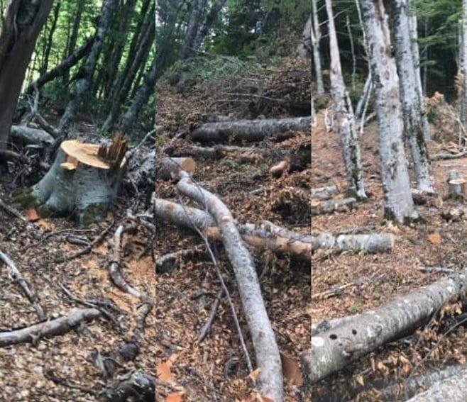 Banorët rojtarë të pyllit në Bulqizë 'fitojnë' ndaj aferave privat-shtet, por  sa do të rezistojnë?