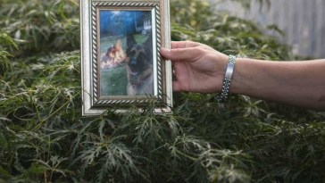 Allison Mahoney with a photograph of her 7-year-old German Shepherd, Buddy, who died July 11 in Staten Island, New York. KHOLOOD EID/NATIONAL GEOGRAPHIC