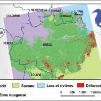 La déforestation amazonienne, un phénomène en progression