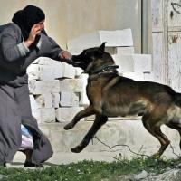 Un chien attaque une Palestinienne (ou la vérité tronquée)