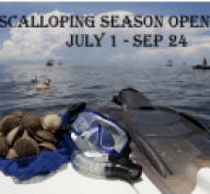 Scallop Season