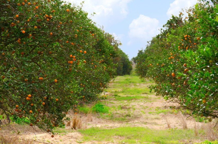 citrus florida funding