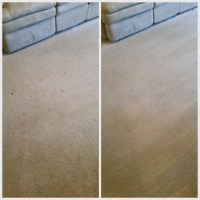 Removing drink spots from the carpet | CitruSolution