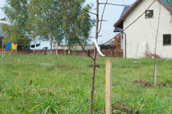 Planted Another 6 Fruit Trees in the Orchard.