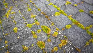 Calgary roof with moss