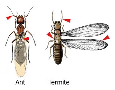 Non Conventional Pest Control Practices - pest control