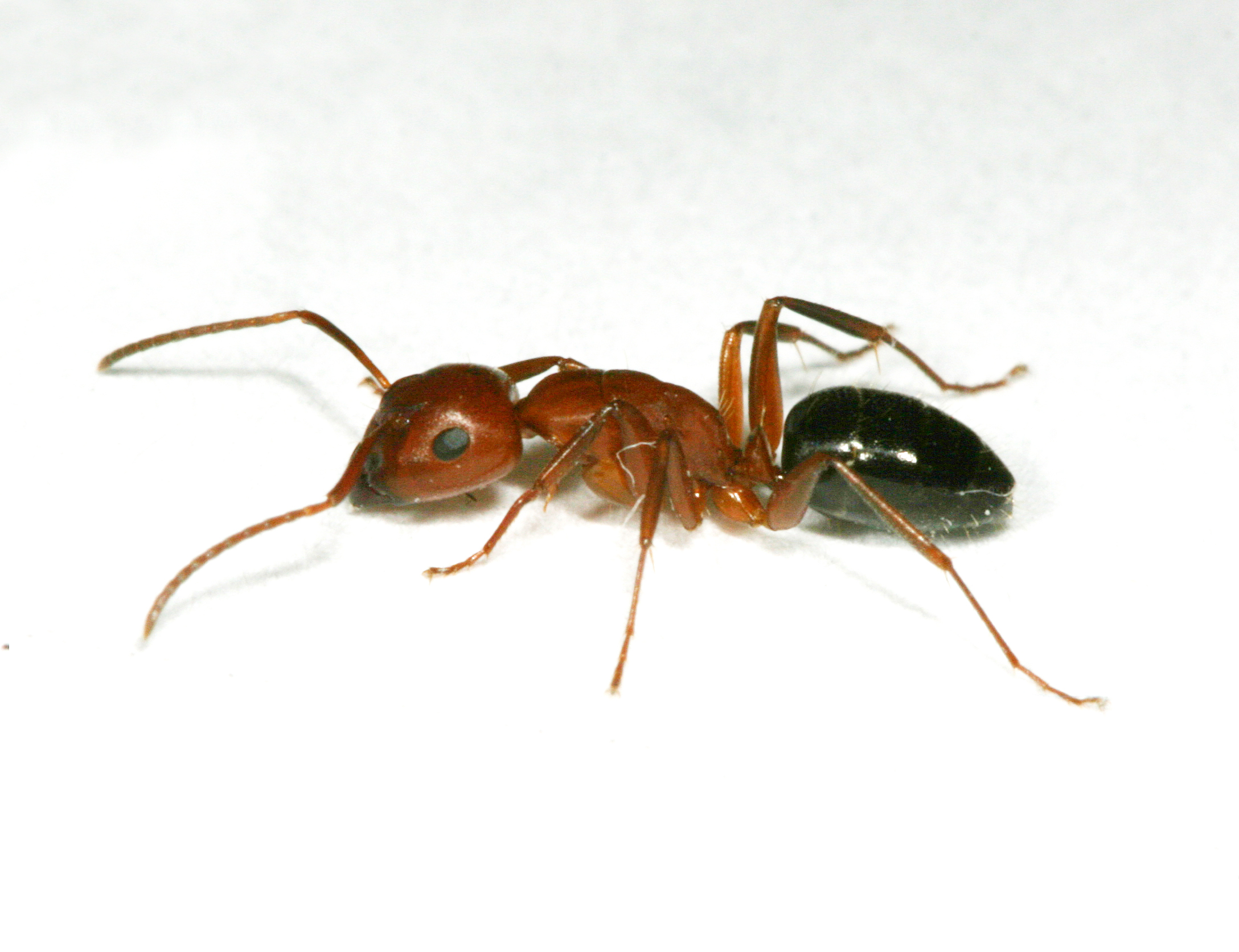 when ants invade insects