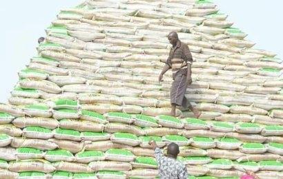 Ogun begins mass production of ofada Rice