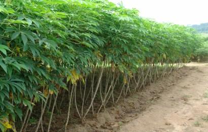 Farmers Seek Fertiliser Subsidy